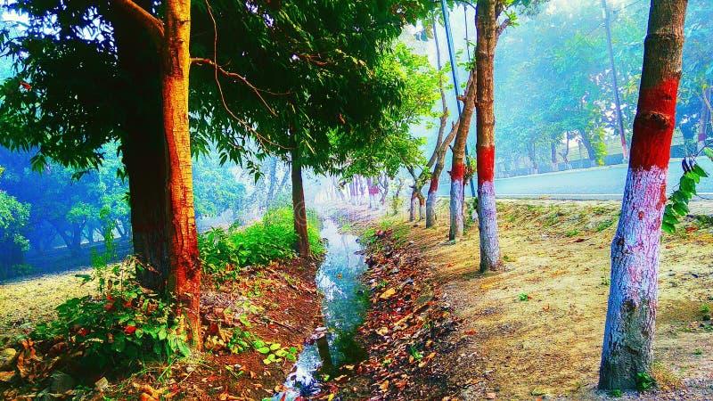 Träd tillsammans med en kloak royaltyfri fotografi