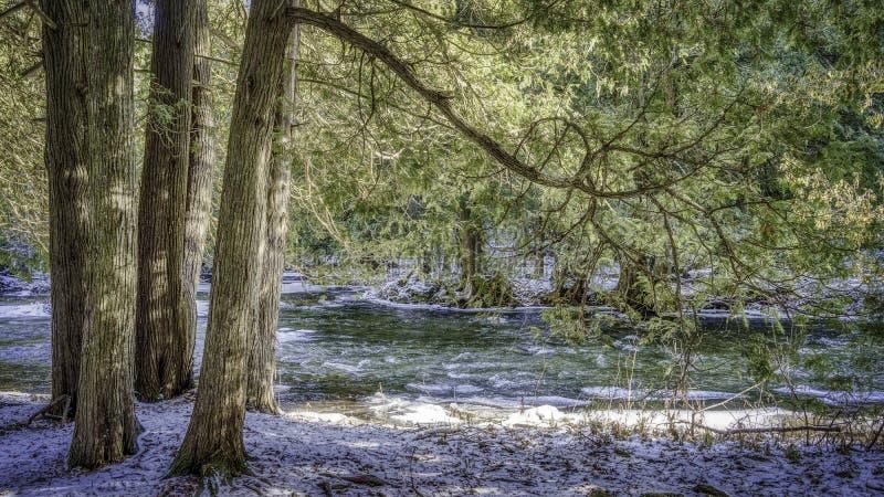 Träd tillsammans med en ström i vinter arkivfoton