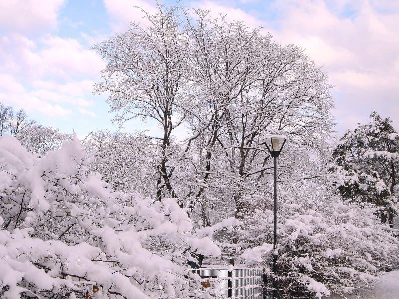 Träd under en insnöad stad parkerar royaltyfri fotografi