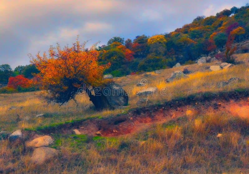 Träd under tryck royaltyfri fotografi