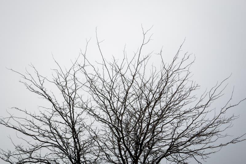 Träd utan sidor mot en ren himmel arkivfoton