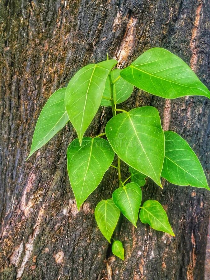 Träd växer från träden royaltyfria bilder