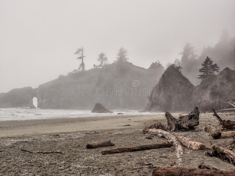 Träd växer på havsbuntar på den sandiga stranden royaltyfri fotografi