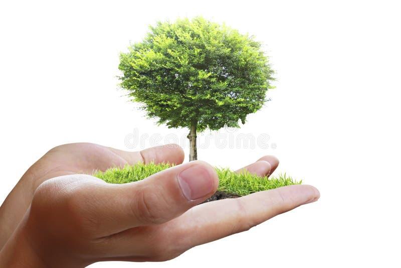 Träd växt i handen arkivfoto