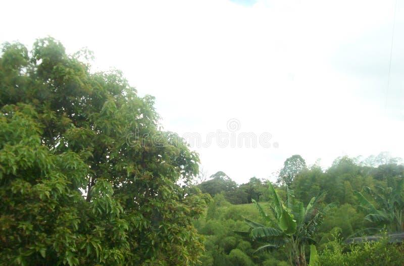 Träd, vegetation och himmel på kaffezonen i Colombia royaltyfria foton