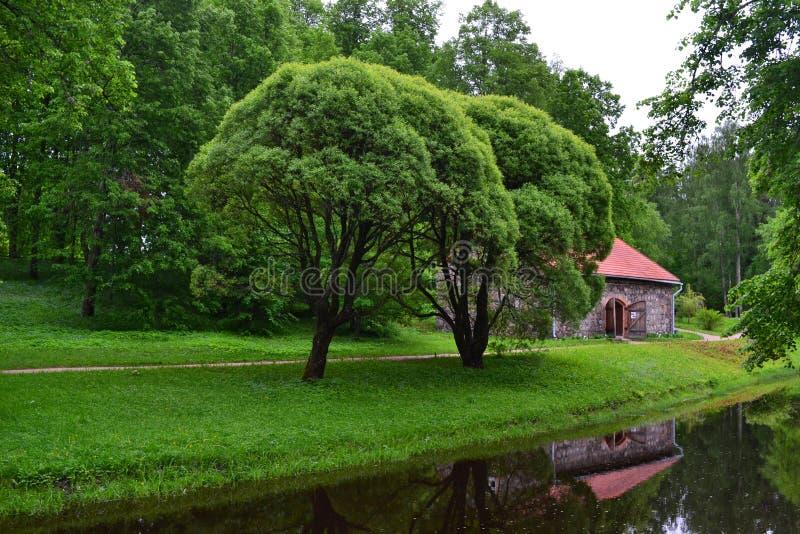 Träd vid floden royaltyfria bilder