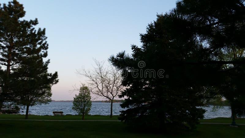 Träd vid sjön royaltyfri foto