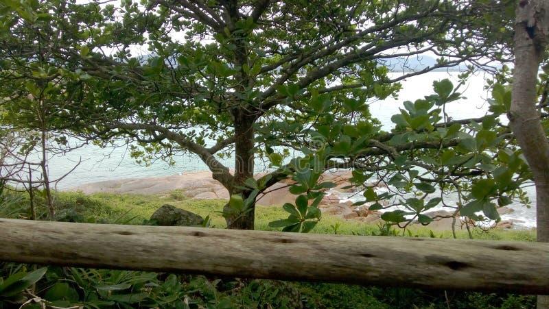 Träd vid stranden royaltyfri fotografi