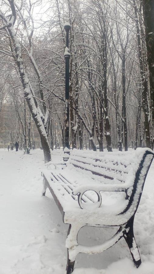 Träd vinter Ta av planet i parkera royaltyfria foton