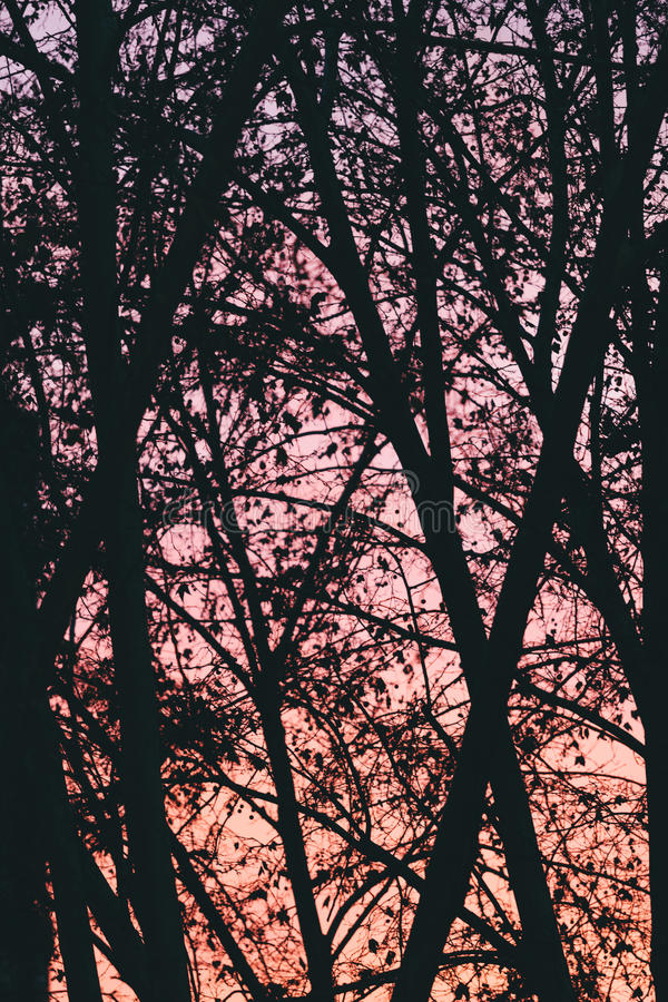 Trädbakgrund över rosa solnedgång arkivbild