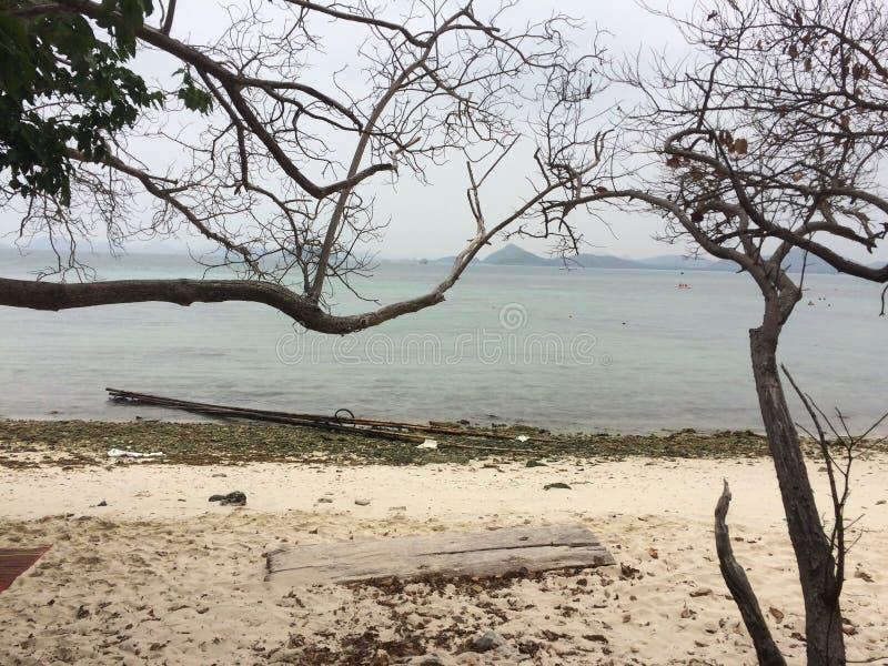 Trädbehide stranden arkivfoton