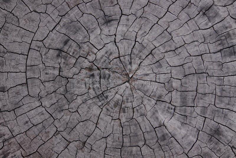 Trädcirkel royaltyfria foton