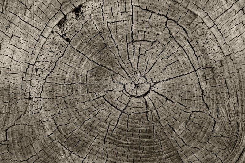 Trädcirklar arkivbilder