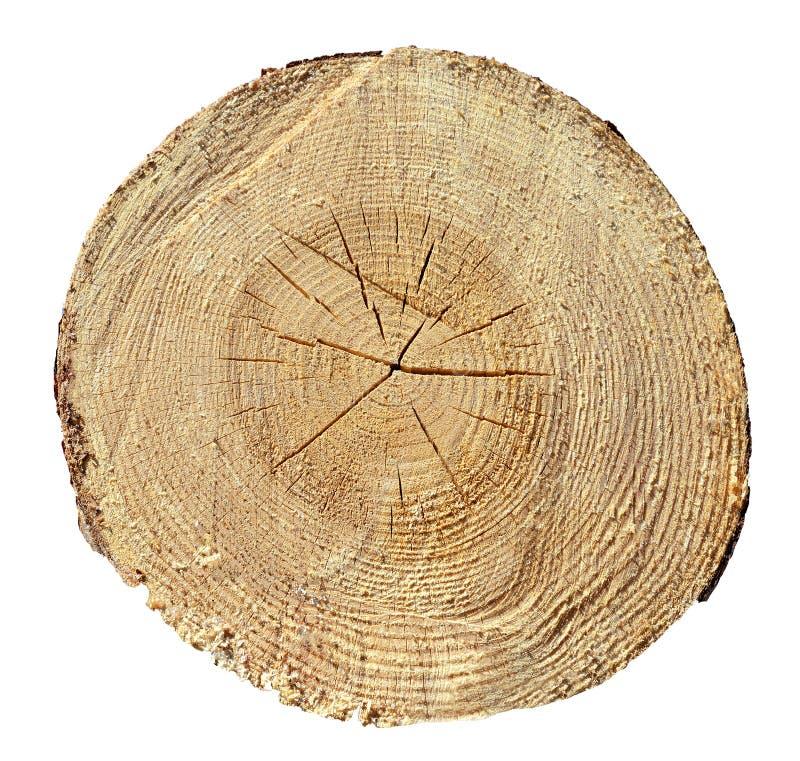 Trädcirklar, trä, journal Trä texturera fotografering för bildbyråer