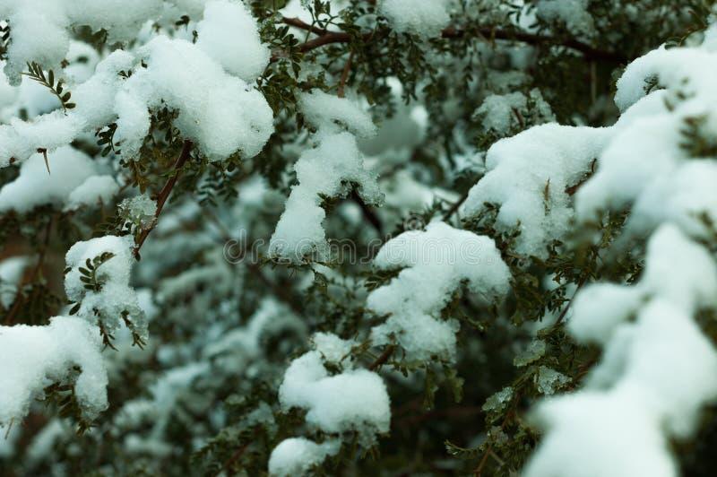 Trädcoverd vid snö royaltyfri foto