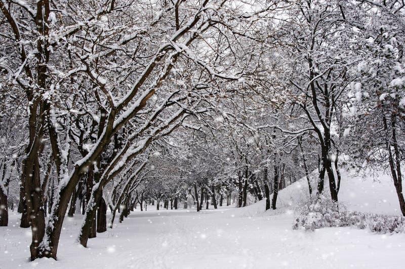 Träden i parkera i vinter Det snöa för ` s royaltyfri bild