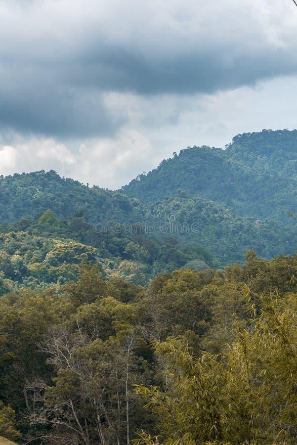 Träden i skogen royaltyfri fotografi