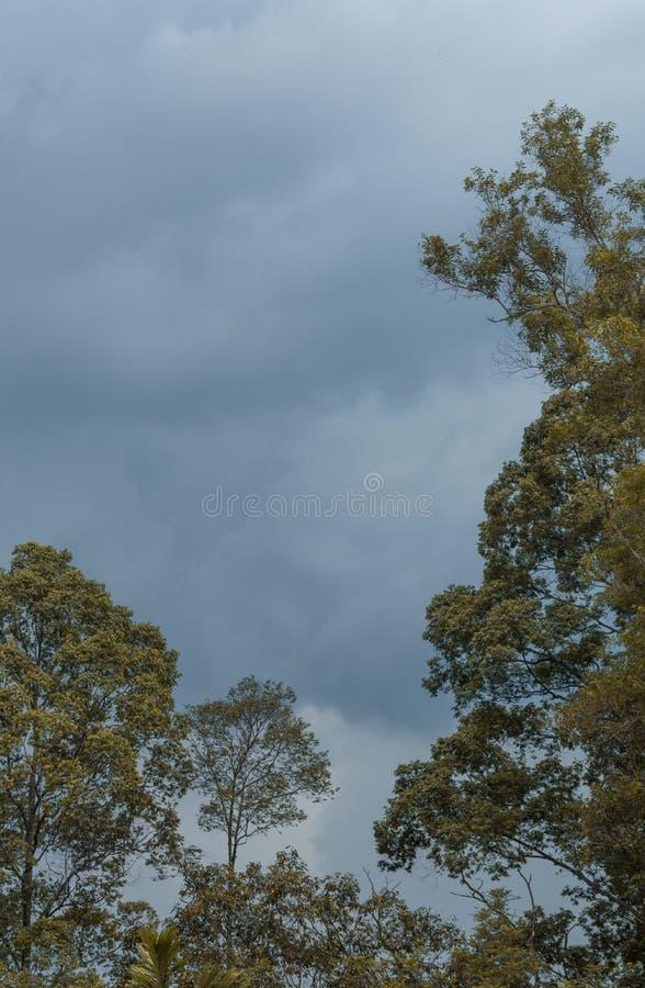 Träden i skogen arkivfoto