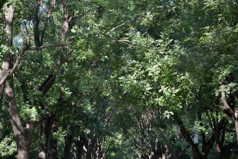Träden runt om Peking Pic togs i 2017 arkivbilder