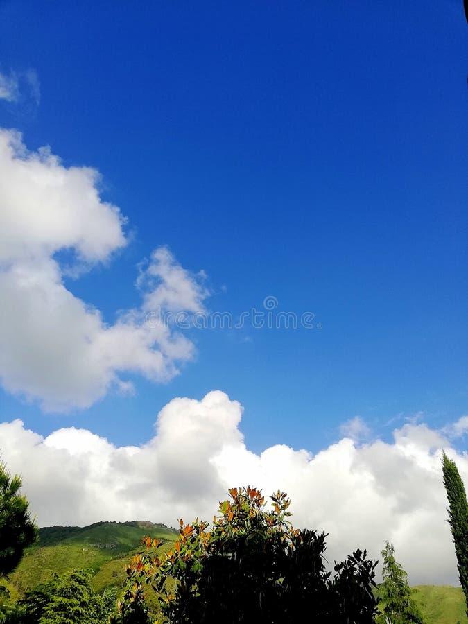 Träden skulle gilla att ta flyg i den blåa himlen royaltyfri foto