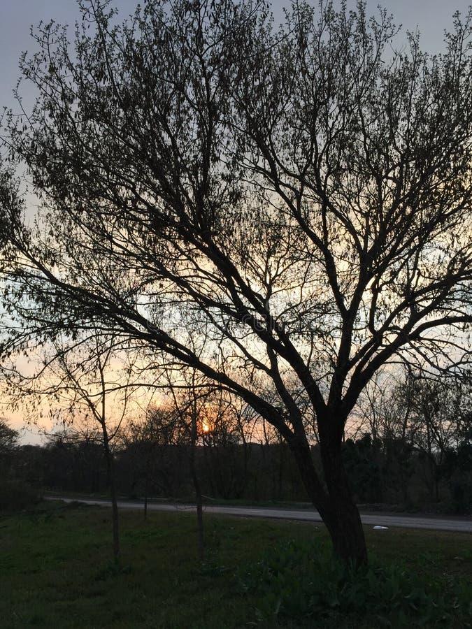 Träden under ett molnigt skal i en fredlig park royaltyfria foton