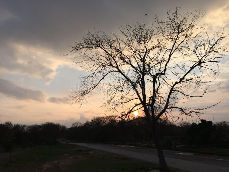 Träden under ett molnigt skal i en fredlig park arkivbilder