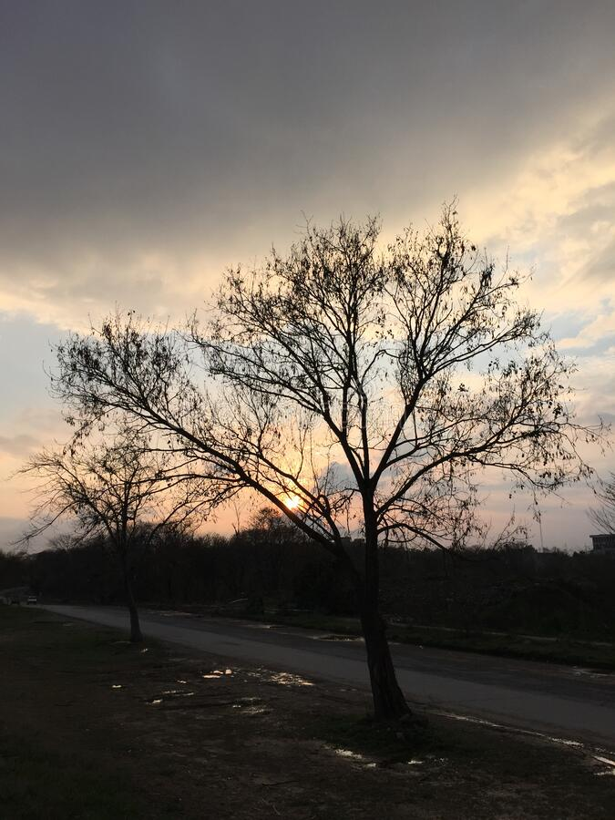 Träden under ett molnigt skal i en fredlig park royaltyfri bild