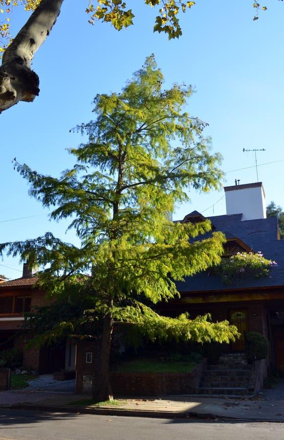 Trädet av illusionen arkivfoto
