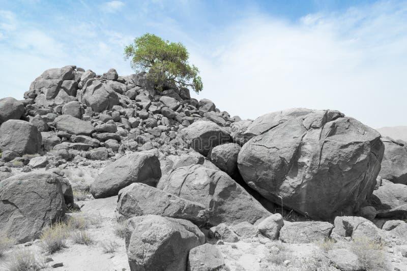 Trädet av liv! arkivbild