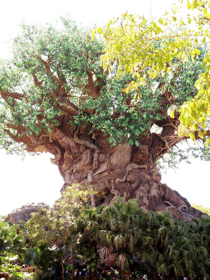 Trädet av liv i djurriketen parkerar fotografering för bildbyråer