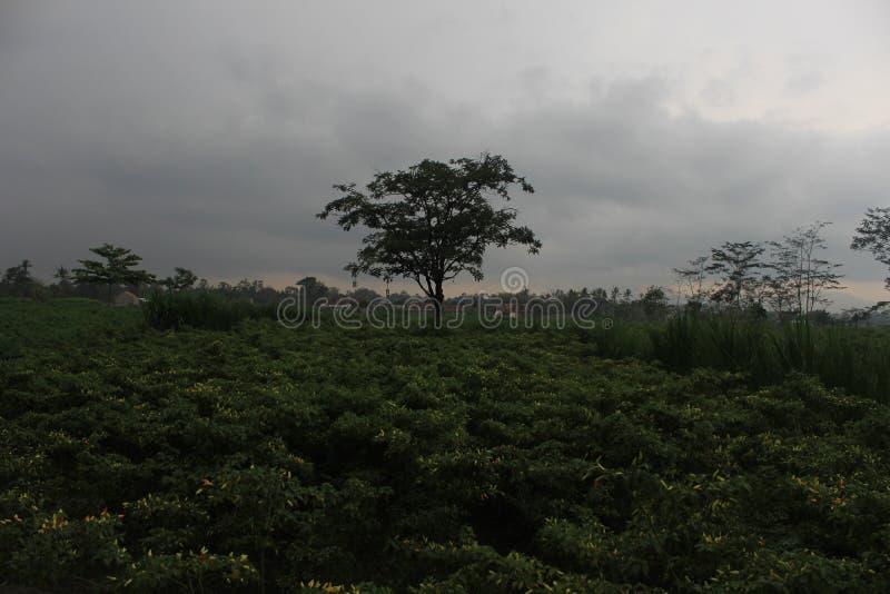 Trädet av liv Yggdrasil royaltyfri fotografi