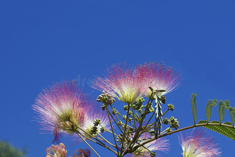 Trädet blomstrar solskenet royaltyfri foto