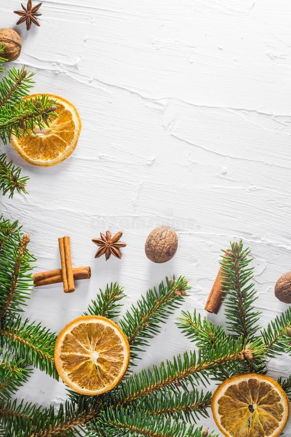 Trädet för barrträdet för ris för vit bakgrund för jul torkade det nya citruns royaltyfria foton