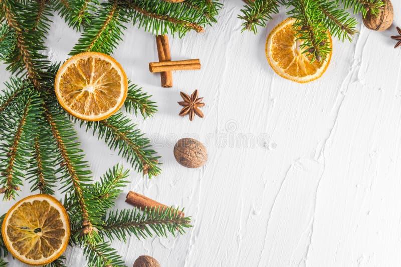Trädet för barrträdet för ris för vit bakgrund för jul torkade det nya citruns royaltyfri bild