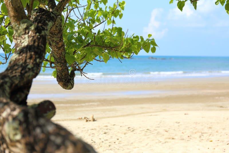 Trädet fördjupa in i stranden royaltyfria foton