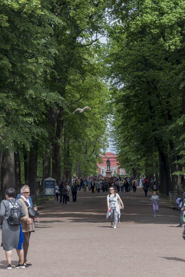 Trädet fodrade avenyn i jordningen av den Peterhof slotten St Petersburg Ryssland royaltyfria foton