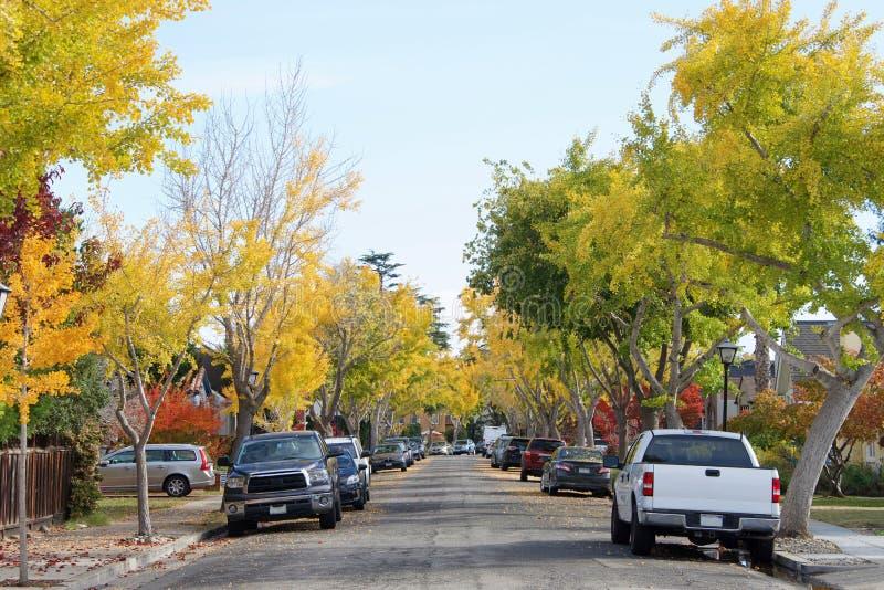 Trädet fodrade grannskapen med sidor som faller på gatan arkivfoto