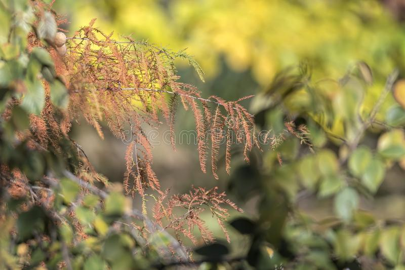 Trädet i höst på parkerar royaltyfria foton