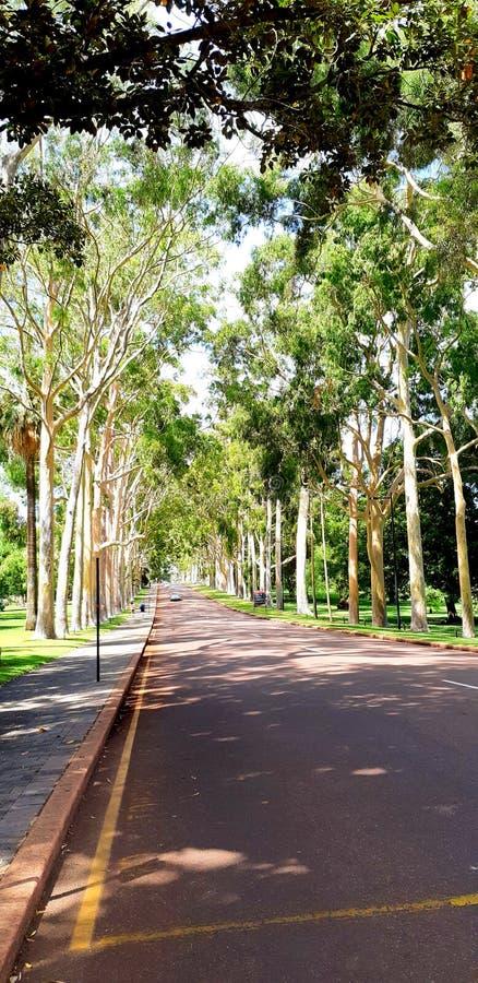 Trädet i konungar parkerar - vägen royaltyfria bilder