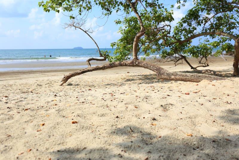 Trädet in i stranden arkivfoto