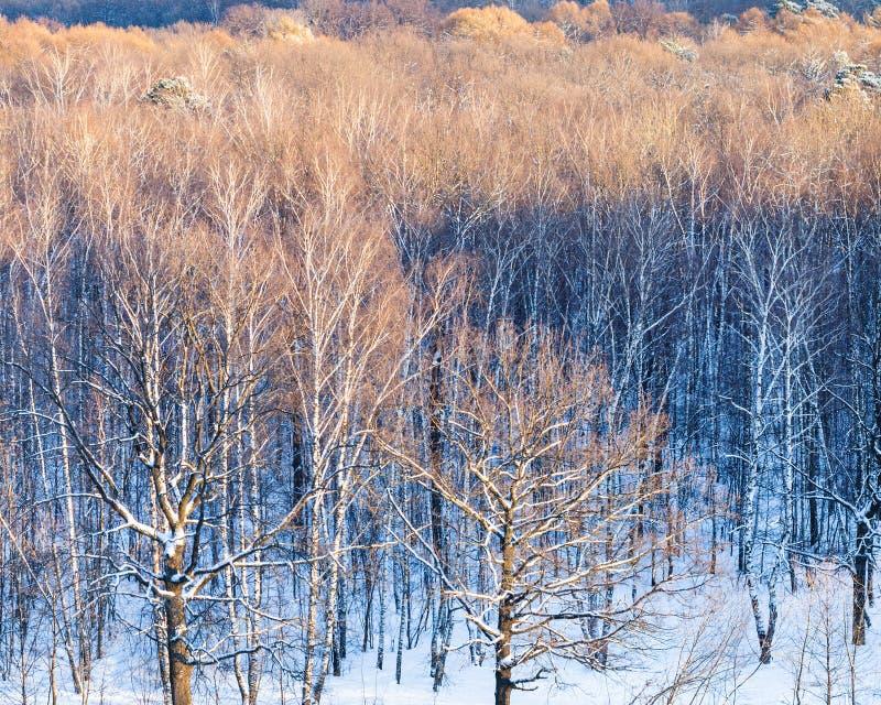 Trädet krönar upplyst vid solljus i vinter royaltyfria foton