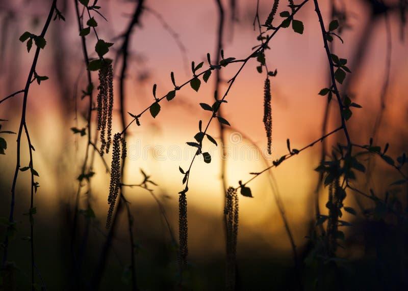 Trädet lämnar solnedgångbakgrund arkivfoton