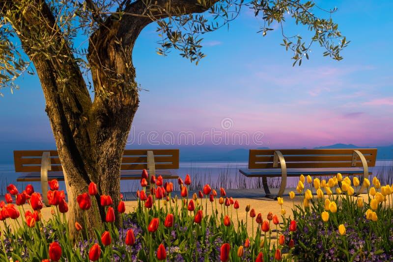 Trädet med tulpan blommar och två platsbänkar royaltyfri foto