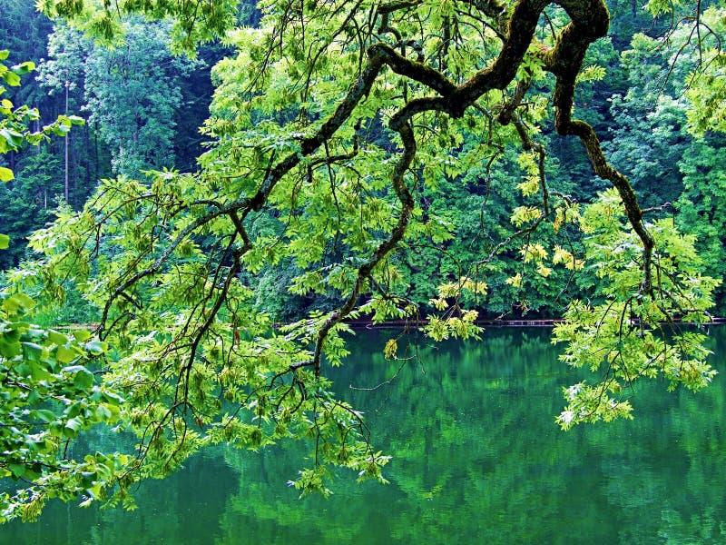 trädet naturen, gräsplan, träd, skogen, våren, landskapet, sidor, växten, bladet, vatten, parkerar, floden, himmel, solen, filial arkivbild