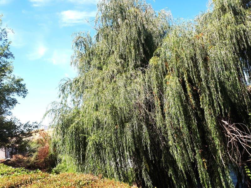 Trädet och det mycket bra vädret arkivfoto
