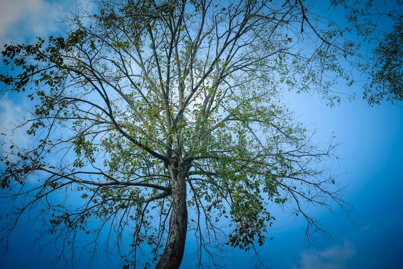 Trädet och himlen med molnen arkivfoto