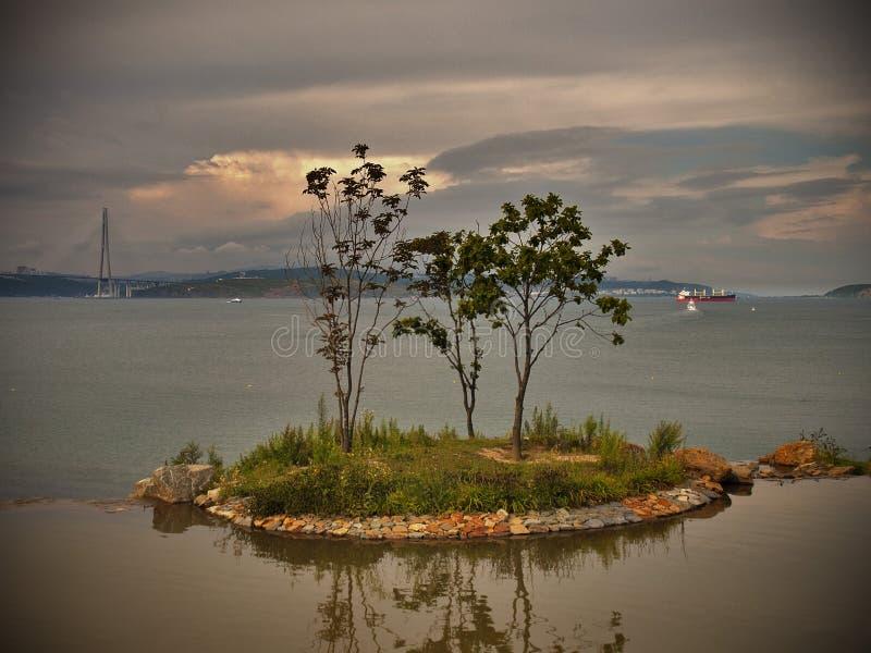 Trädet på ön arkivfoton