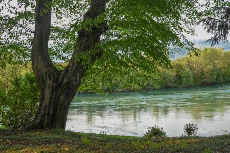 Trädet på floden royaltyfri foto