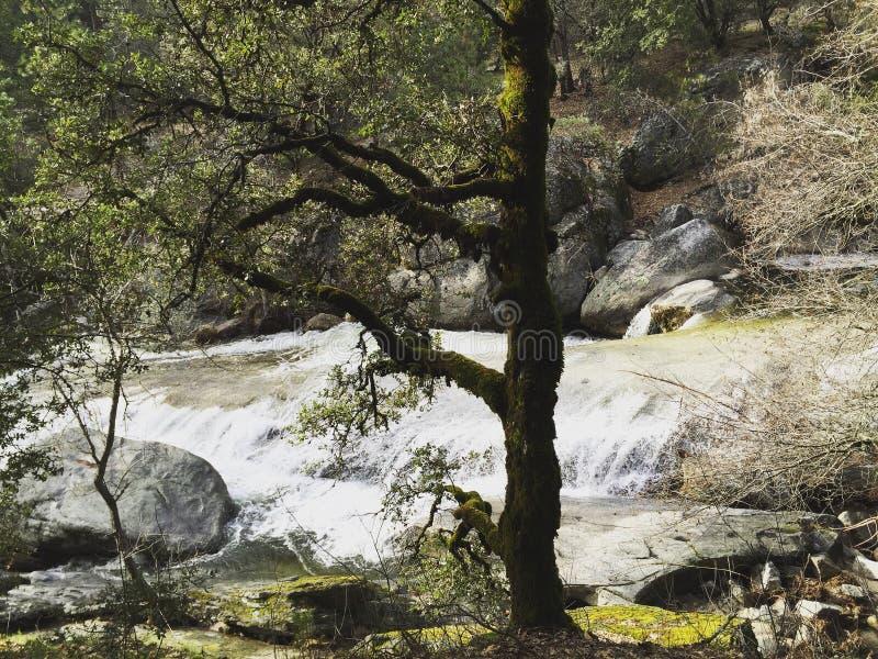 Trädet på floden royaltyfria bilder
