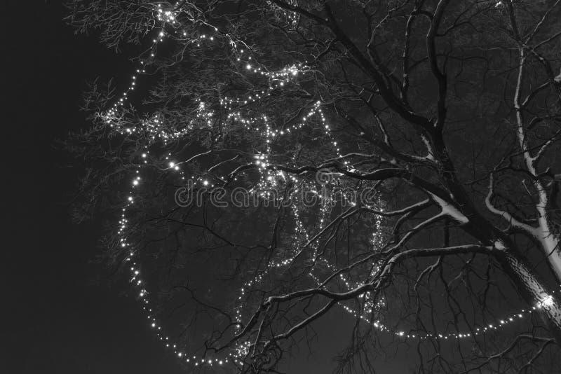 Trädet på gatan dekoreras med den gula girlanden, svartvitt foto arkivbilder